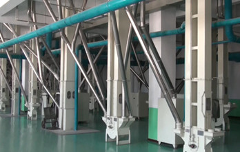 Maize milling plant or corn flour milling plant material conveying