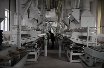 Maize milling plant or corn flour milling plant corn germ extraction